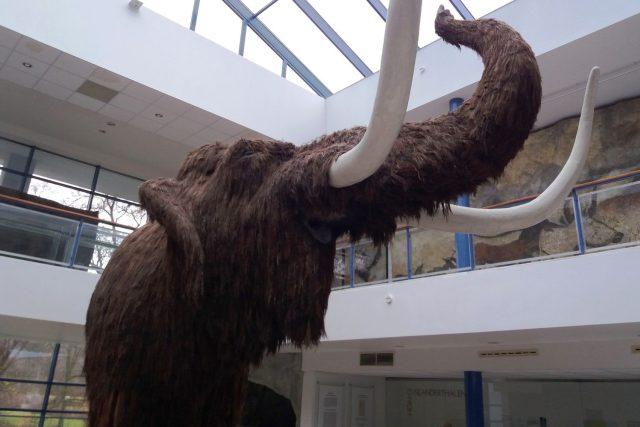 Doslova největším magnetem expozice je jednoznačně maketa mamuta   foto: Hana Ondryášová,  Český rozhlas