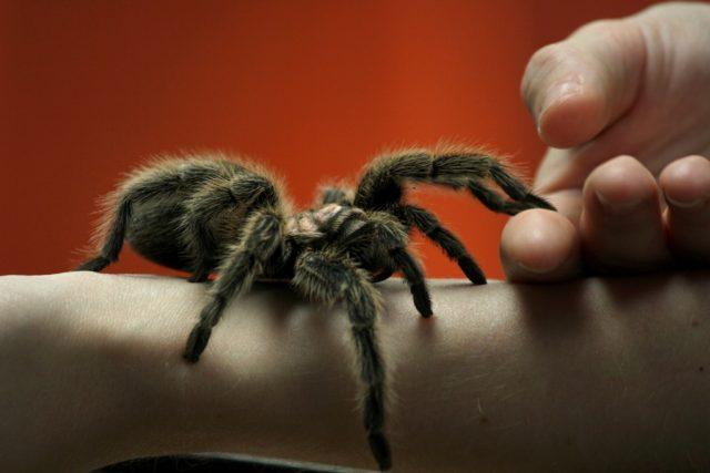 Arachnofobie | foto: Zdroj: Flickr,   CC BY 2.0,   GollyGforce