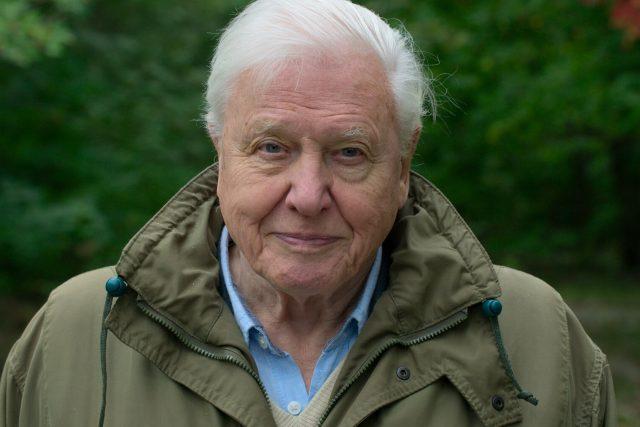 David Attenborough ve filmu Život na naší planetě | foto: Netflix