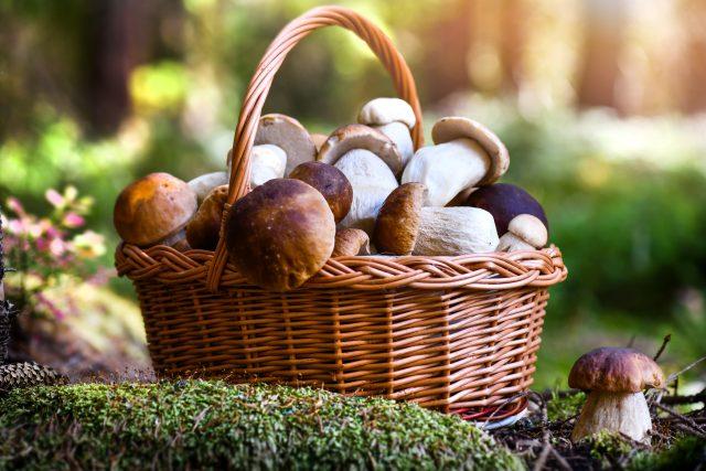 Hurá na houby!