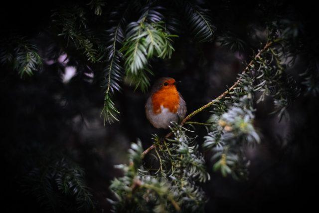 Vánoce - zima | foto: Unsplash,  CC0 1.0
